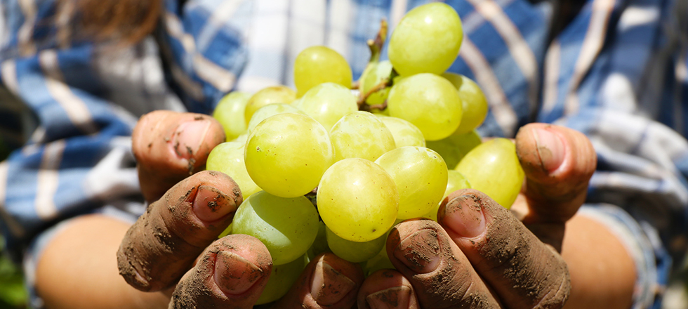 Weingüter aus der Region