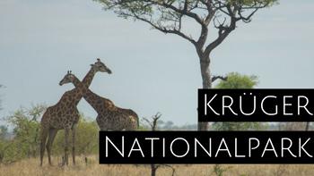 Krüger Nationalpark mit Giraffe