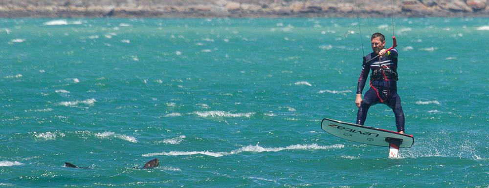 Kitefoilen in Langebaan Südafrika mit einer Robbe