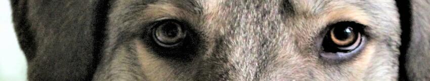 a103ede5a7f77d Aktuelles von und über uns - Tierschutz-Limburg-Weilburg Webseite!