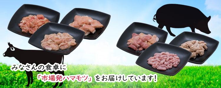 みなさんの食卓に横浜食肉市場発「ハマモツ」をお届けします 横浜食肉副生物協同組合