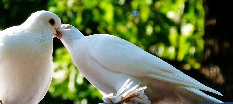 Der Zauber der Tauben