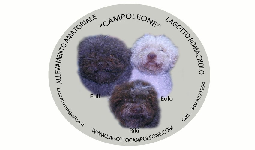 i principali tipi ti tartufo - lagottocampoleone - Piante Simbionti Del Tartufo Foto