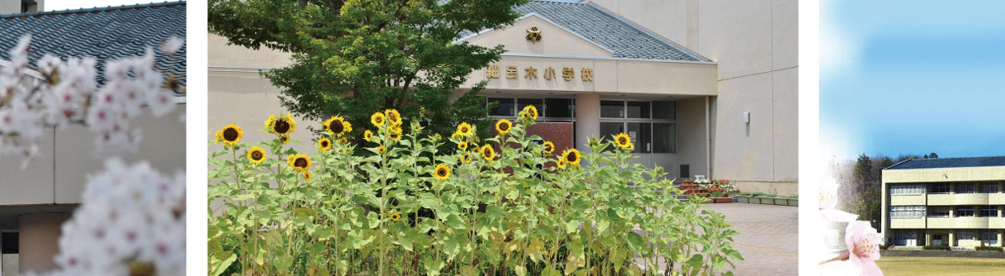 夏には細呂木小学校の校門前でひまわりがお出迎え