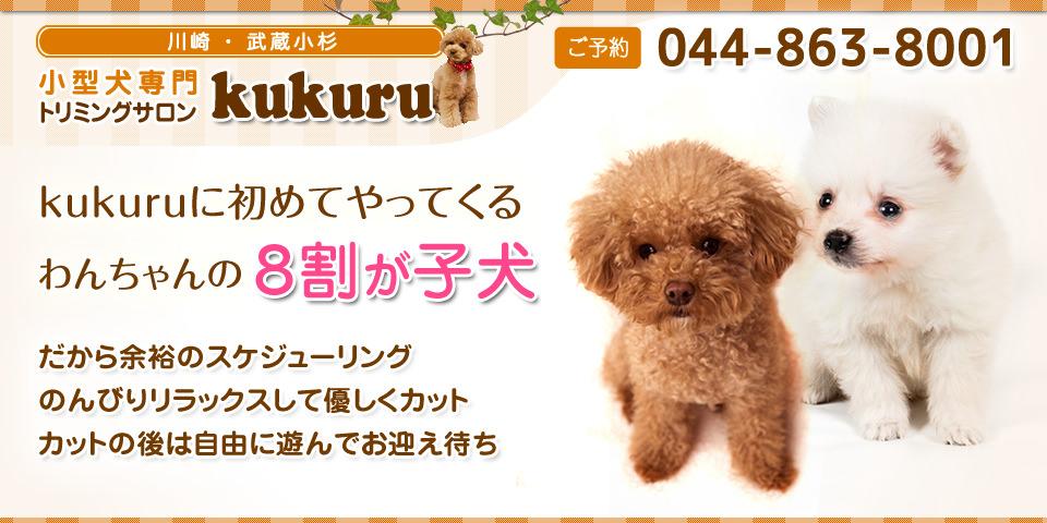 kukuruに初めてやってくるわんちゃんの8割が子犬