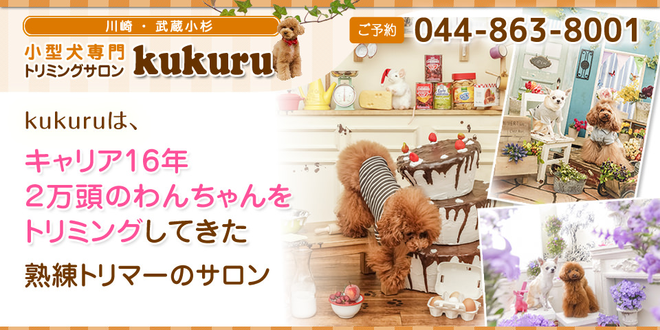 kukuruは、キャリア15年2万頭のわんちゃんをトリミングしてきた熟練トリマーのサロン