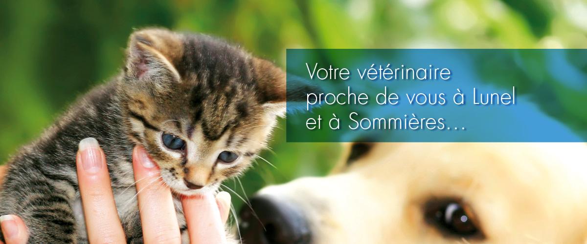 Vétérinaires à Sommières