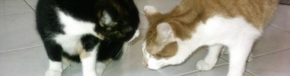 Wurmkur Fur Katzen Die Richtige Entwurmung Ihrer Katze