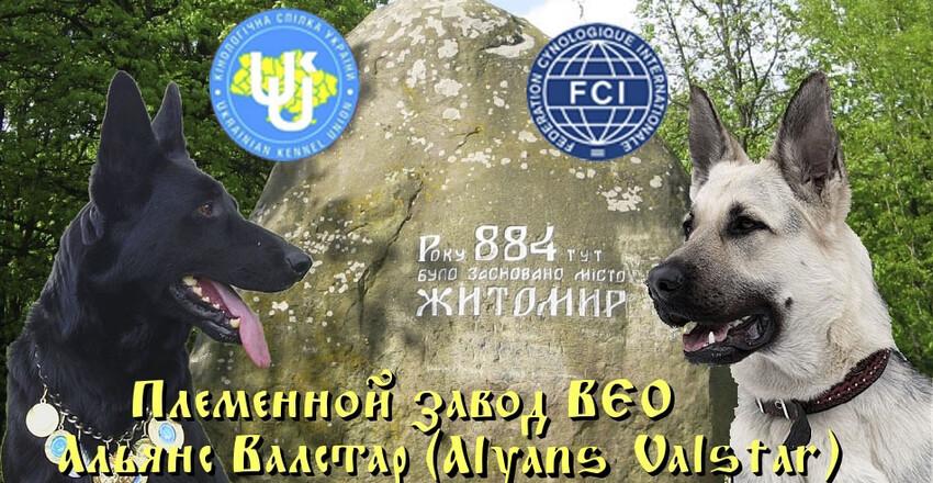 вес щенков восточно европейской овчарки
