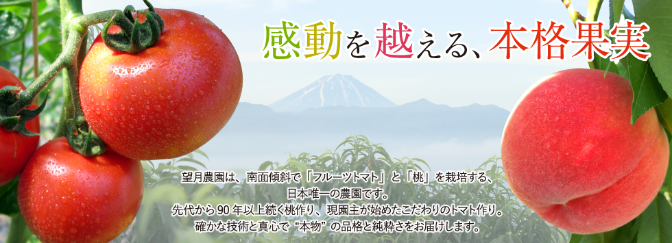 山梨県の望月農園-フルーツトマトと桃の望月農園