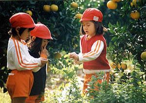 柿の実幼稚園3