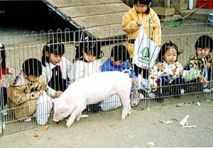 中野島幼稚園3