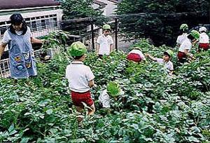 さぎぬま幼稚園3