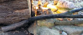 Nuturparks und Tiergärten