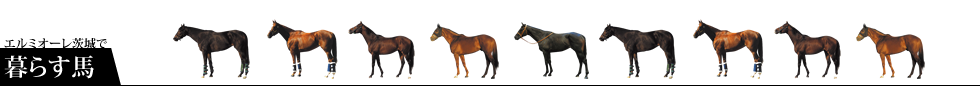 エルミオーレ茨城で暮らす馬:所属馬の紹介