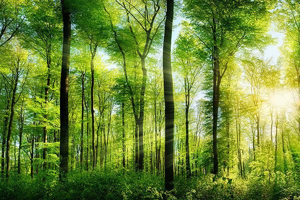Umweltverträglich und nachhaltig drucken – Druckerei Satzdruck