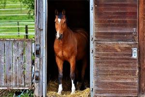Pferdestall Reinigung