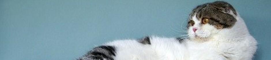 питомник голден стар нижний новгород
