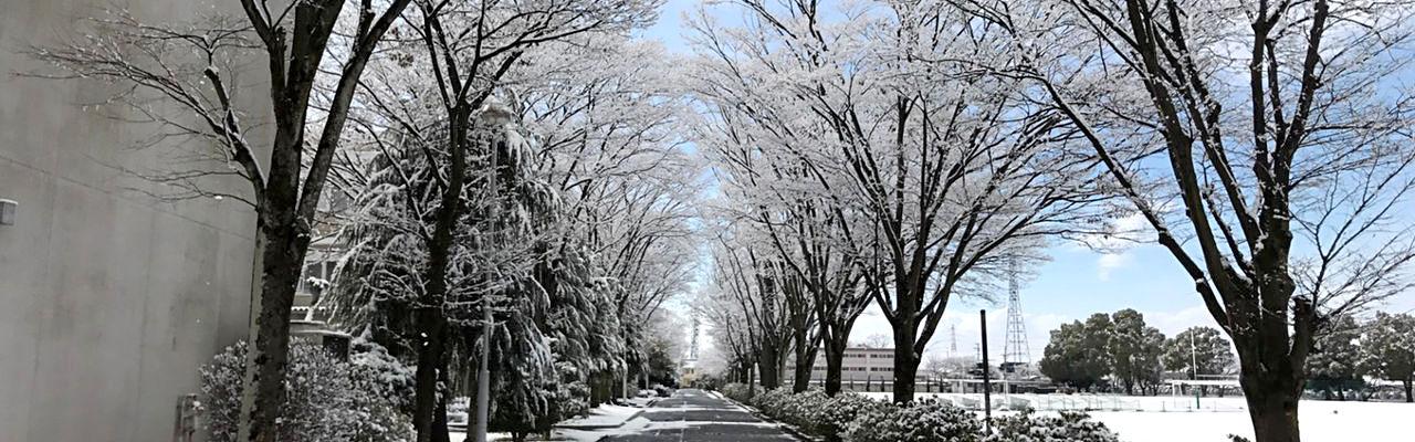 高専並木(冬)|岐阜高専同窓会「若鮎会」