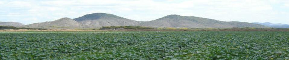 Términos Agronómicos En Ingles Español Agricultura Siempre