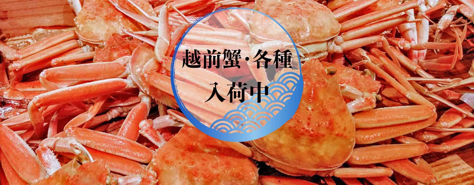 真洋水産では朝獲れ鮮魚各種入荷中です