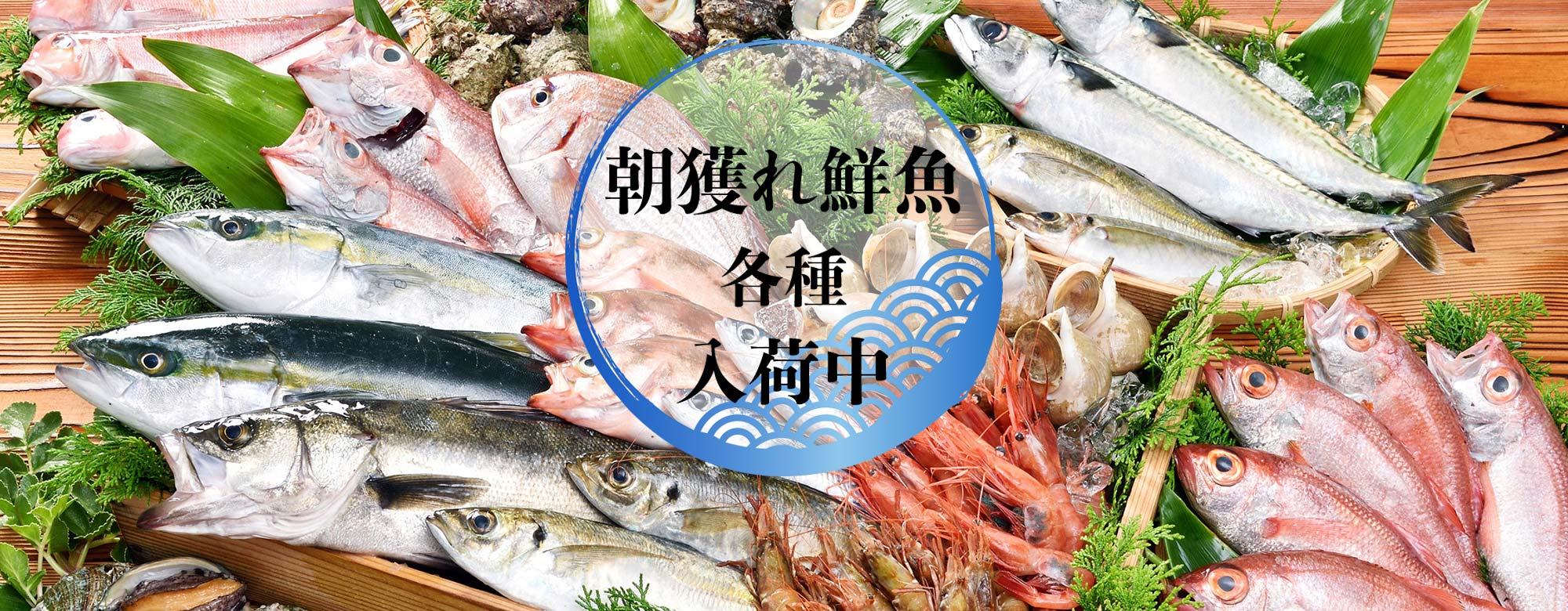 福井県あわら市の真洋水産は越前ガニ専門店です