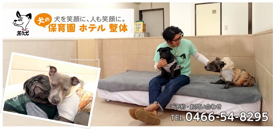 藤沢市辻堂 犬の保育園・犬のホテル・犬の整体「笑う犬」