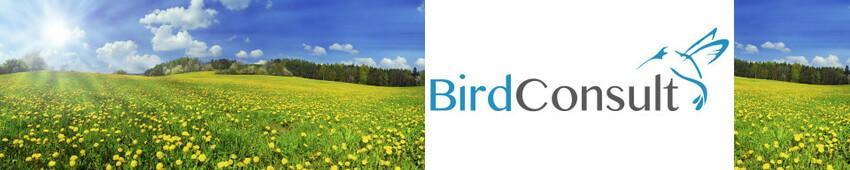 Vogelschutz An Fensterglas Vogelschutz Modernste Technik