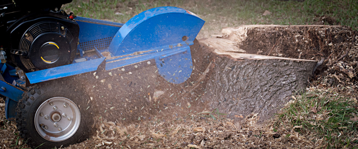 Stump Grinding In Worcester