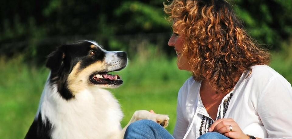 startseite mensch hund trainer mensch hund trainer hundeschule gelnhausen webseite. Black Bedroom Furniture Sets. Home Design Ideas