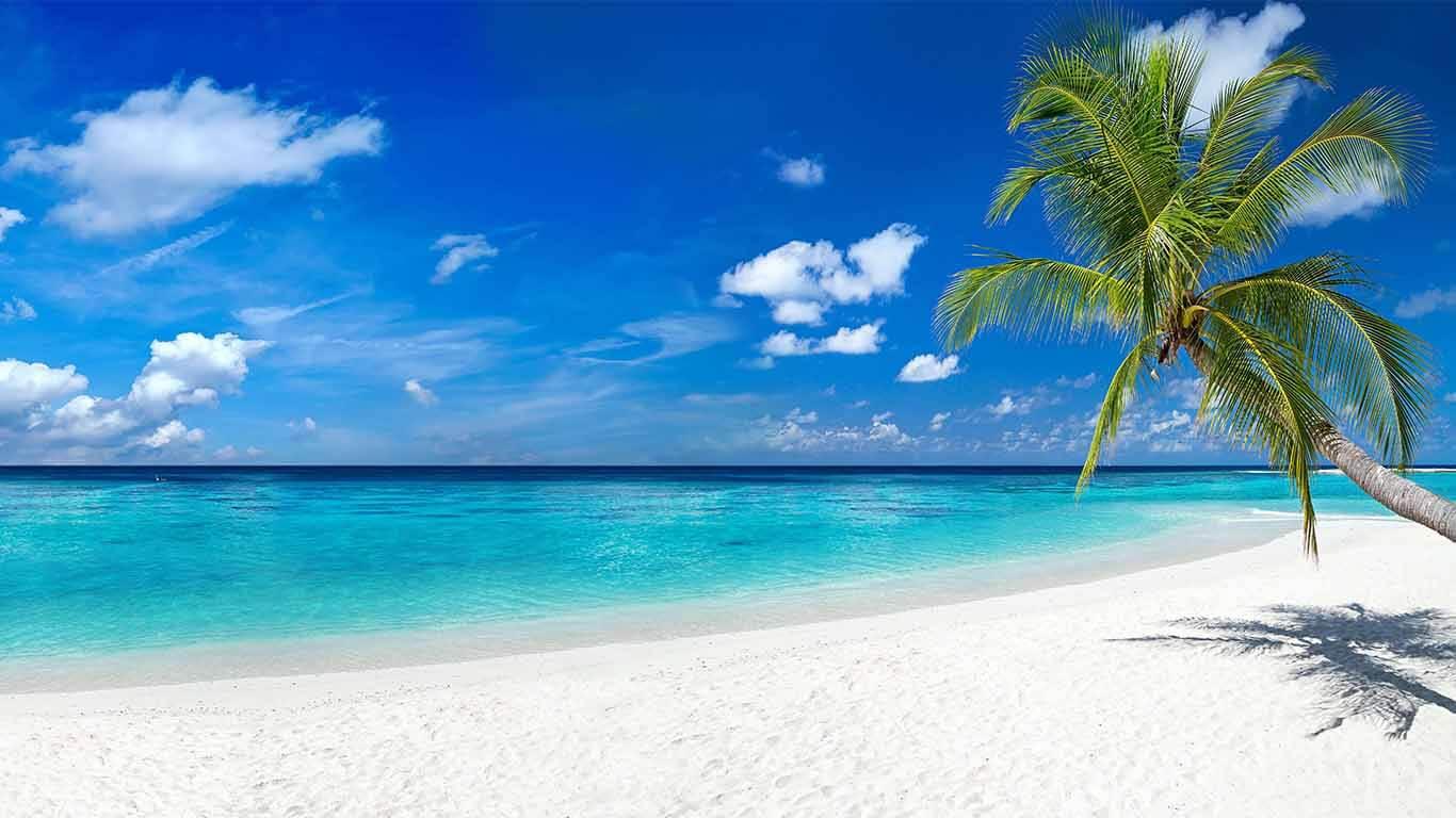 Küchenrückwand Strand und Palme