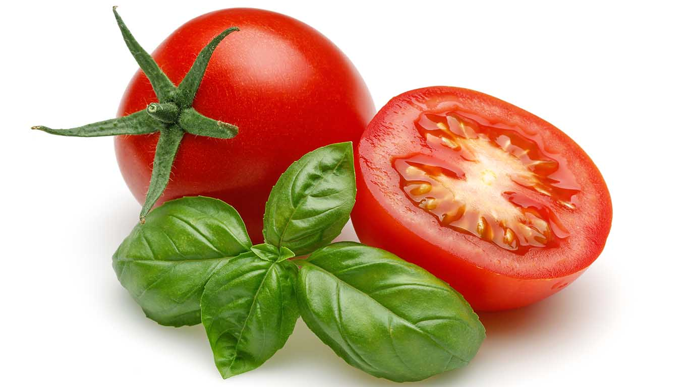 Spritzschutz Tomaten