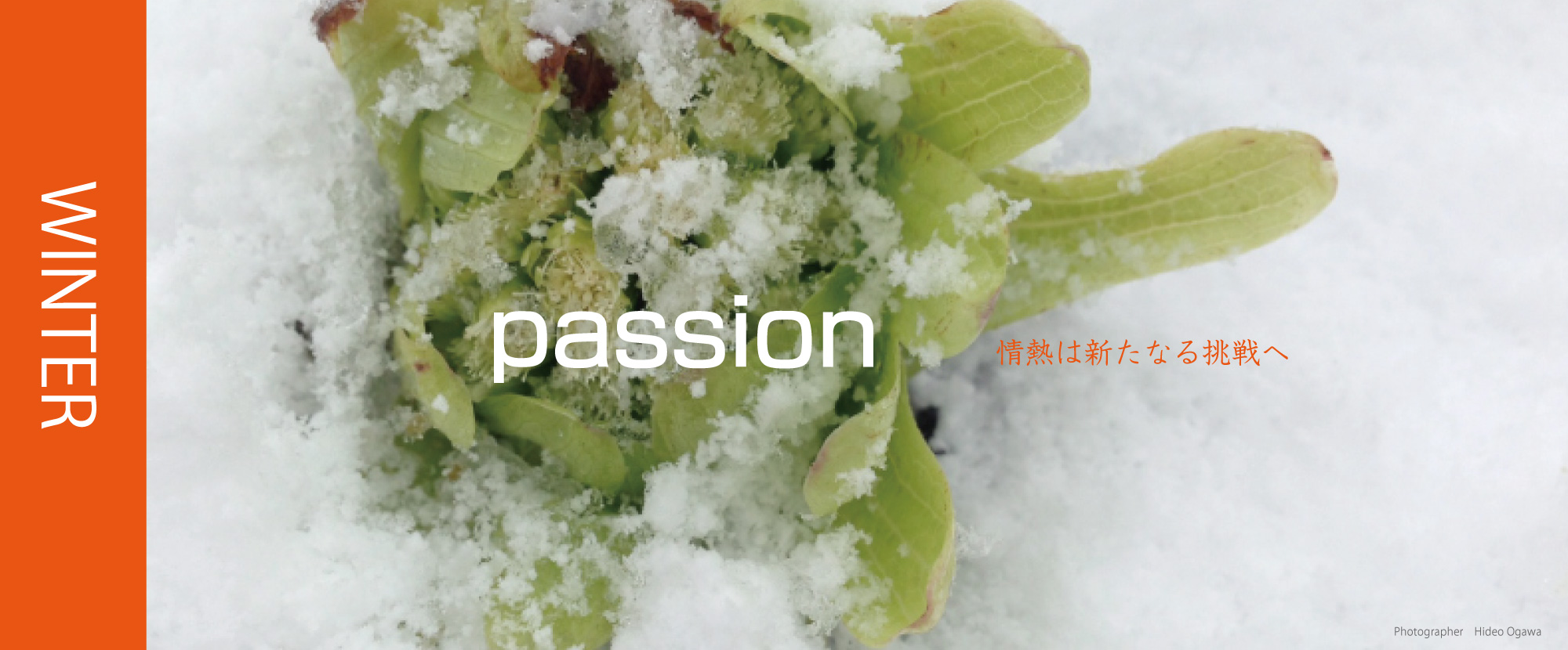 ハートブレーンは情熱を新たなる挑戦へ繋げます