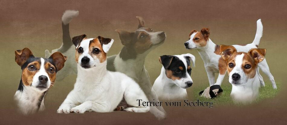 Turniere 2013 - Terrier vom Seeberg