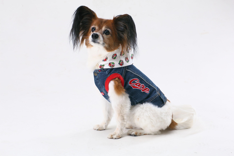 CARP公認小型犬デニムスタジャン