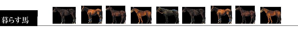 エルミオーレ神戸で暮らす馬:所属馬の紹介