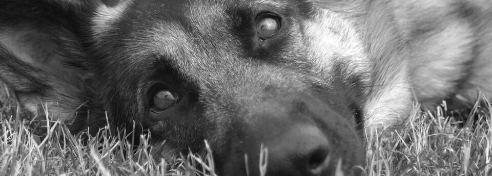 Tiertelepathie