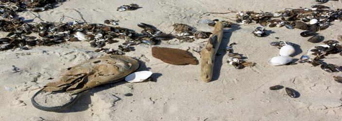 Prerow-Ferienwohnung am Strand