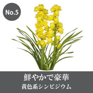 シンビジウム 黄色