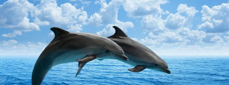 willkommen  gesundwohnendelphinde ~ Staubsauger Delphin