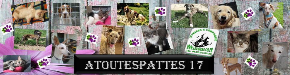 Atoutespattes17 Blog De La Region Poitou Charentes De L Association Levriers Compagnies Chats Chatons Chiens Levriers Espagnols Galgos Podencos En Poitou Charentes