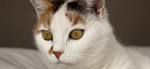 Katzenurin - Tierurin aus Wohnung entfernen