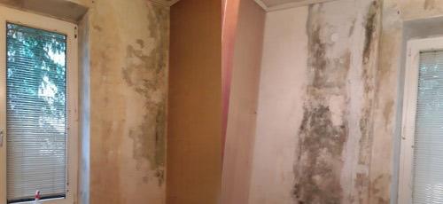 Schwarzschimmel an den Wänden