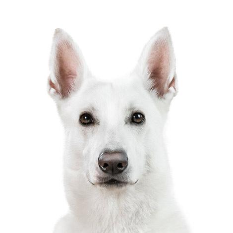 Buerohund-Blue