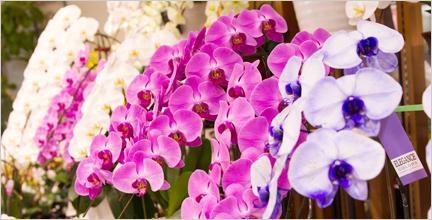 長崎で人気の花屋 花飾人かなざわがおすすめする胡蝶蘭の紹介