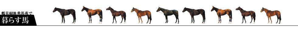 所属馬の紹介