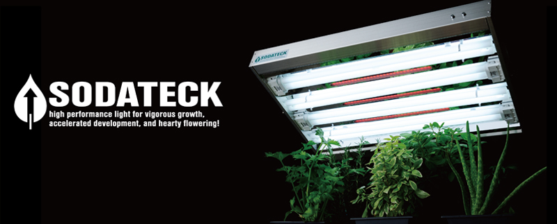 SODATECK high performance light for vigorous growth, accelerated development, and hearty flowering!