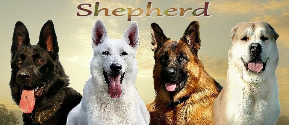 овчарки виды пород фото щенки