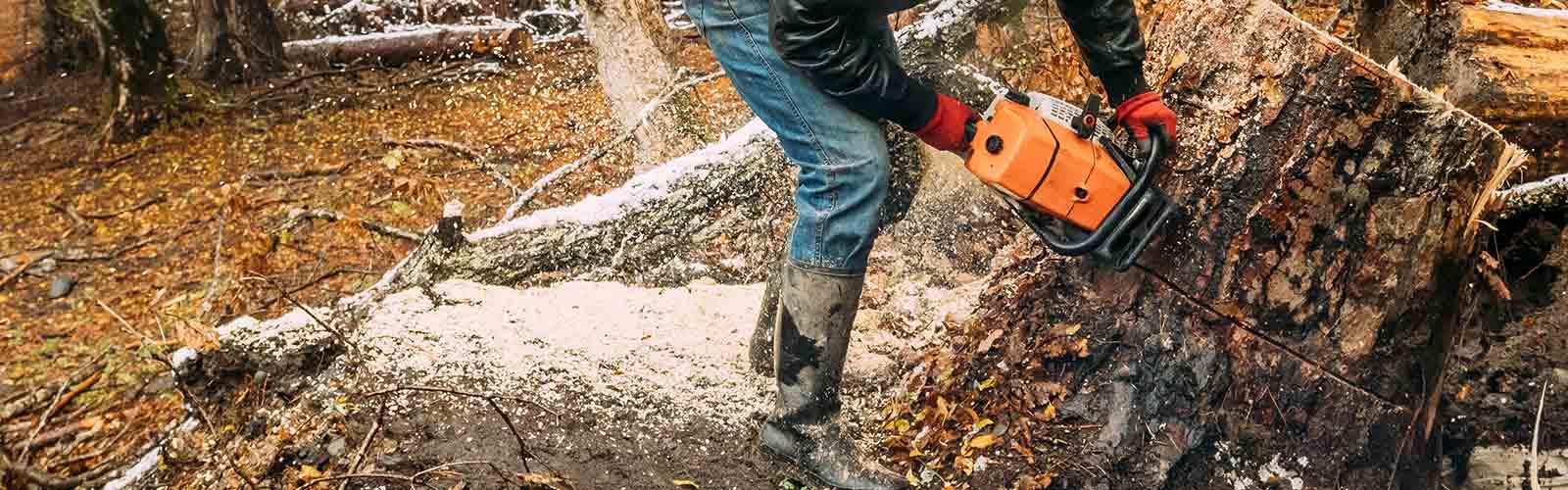 Baumpflege Rohrbeck - Baumfällung mit Kettensäge
