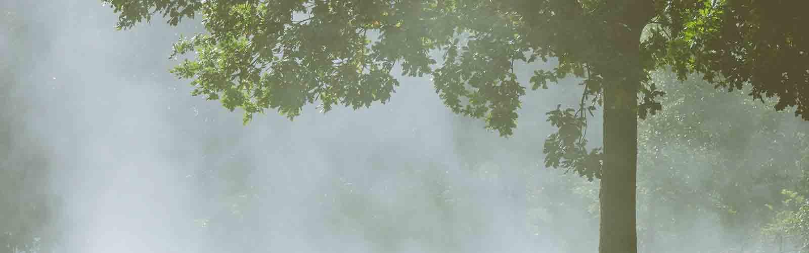 Baumpflege Rohrbeck - Begutachtung von Bäumen
